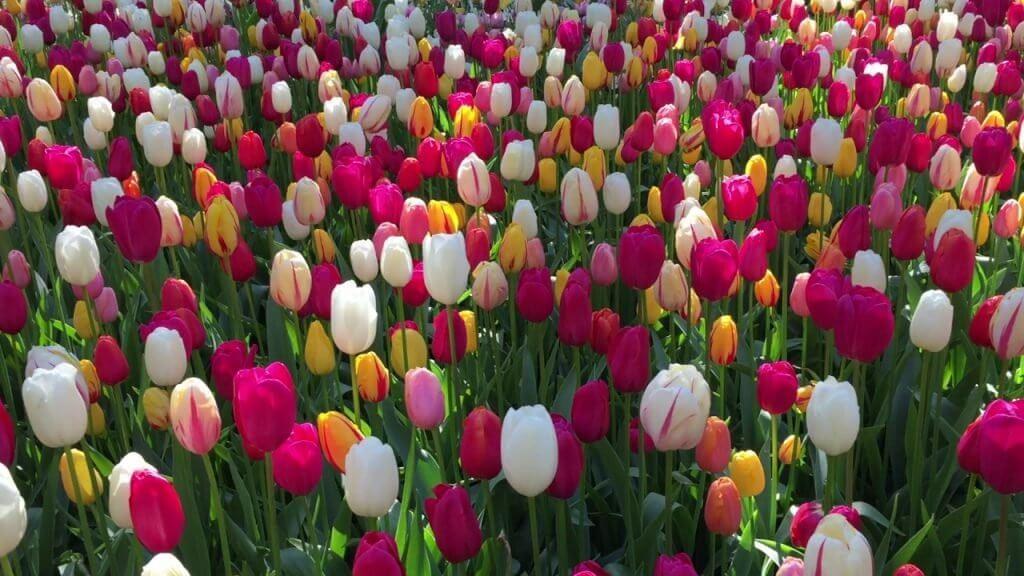 Сколько можно: глава инвестиционной фирмы сравнивает Биткоин и тюльпаны