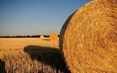 Украинское сено будут поставлять в ОАЭ