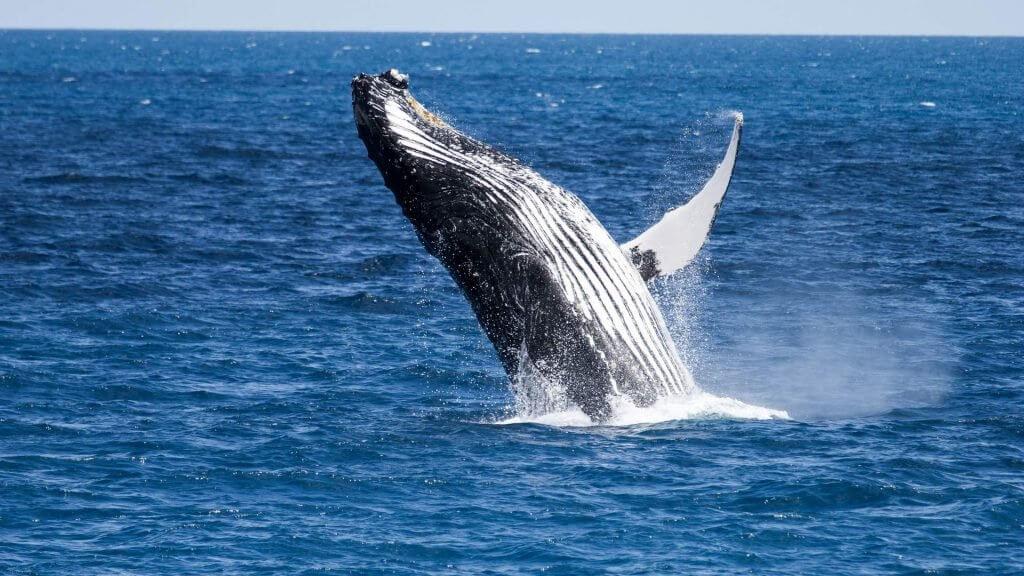 Всё не так плохо: киты ходлят Биткоин
