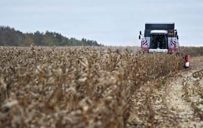 В Украине ожидается рост урожая кукурузы