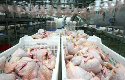 Украина заняла третье место в мире по экспорту курятины в страны ЕС