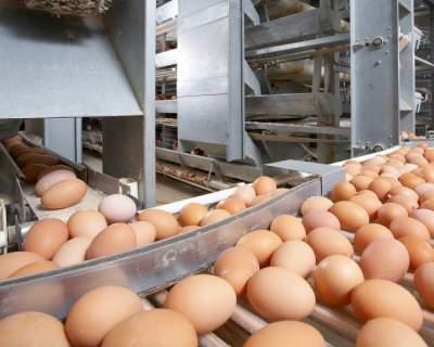 В Украине резко вырос уровень поставки яиц за границу
