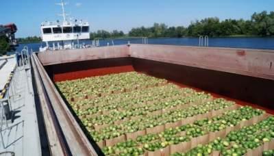 Первая баржа с херсонскими арбузами прибыла в Киев