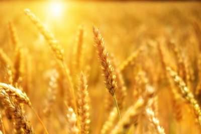 Урожай зерновых в Украине превысил исторический максимум
