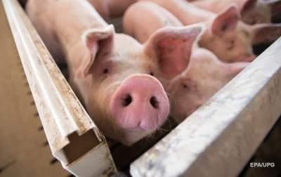 Украина существенно увеличила импорт свинины