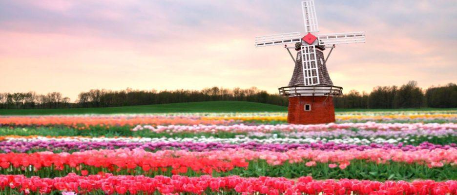 Банковский счет в Нидерландах - залог успеха для бизнеса